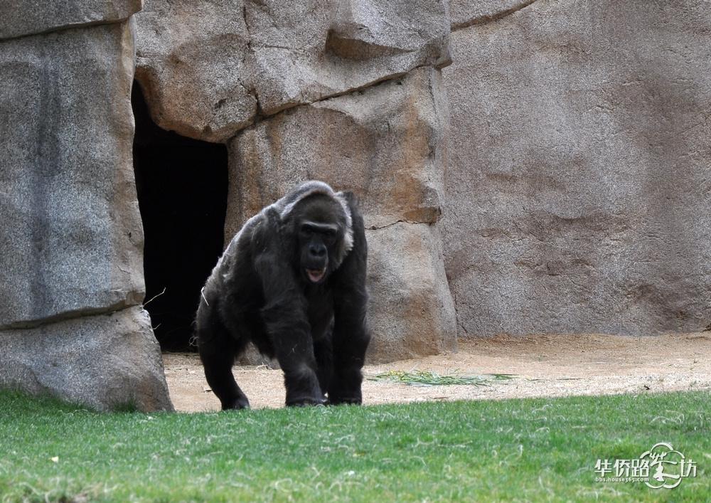 > 美国自由行(15)--圣地亚哥野生动物园