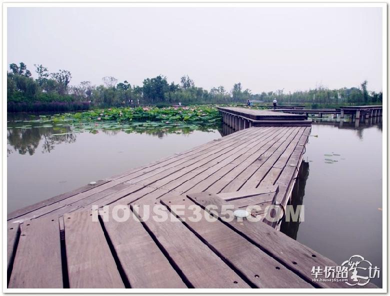 婉转的木板桥