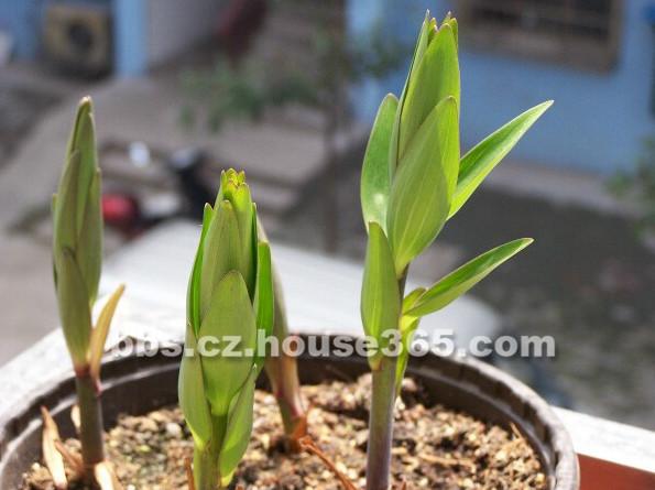 观察绿豆生长过程简笔画