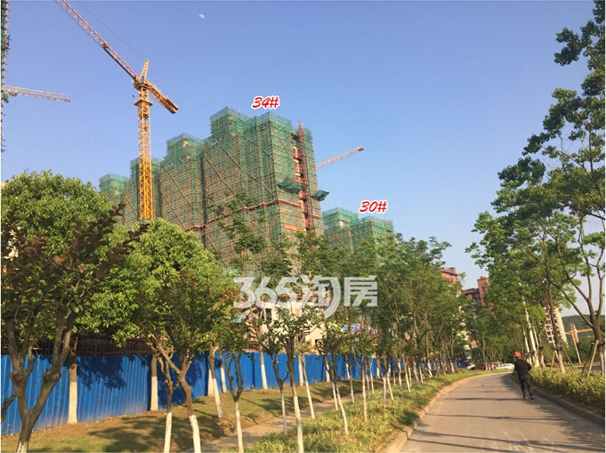高科荣境二期小高层楼栋实景图(5.20)