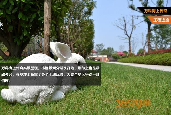 万科海上传奇梅萨花园小兔子实拍(2016年5月摄)