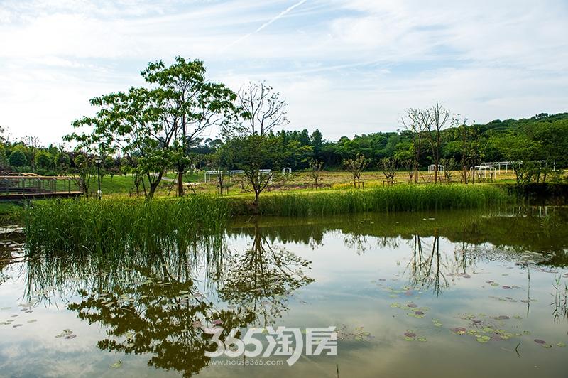鹭山湖农场风景实景图
