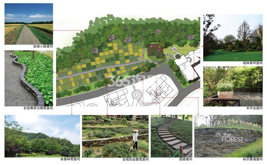 西溪十九府项目种植园